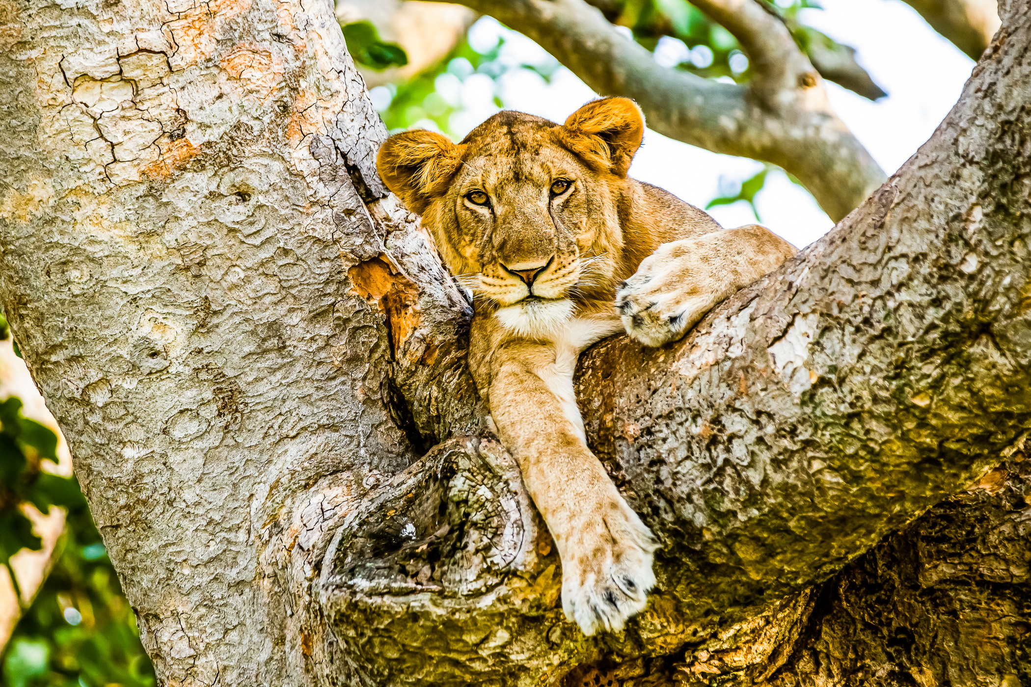 2Travel 2 Safaris - Oeganda